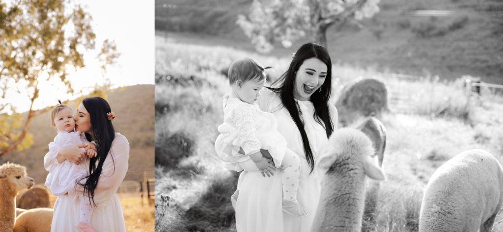 llama family shoot